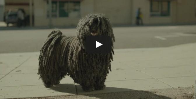 Dr Pepper – Mop Dog (2015)