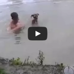 Hero dog jumps in the water to save his owner