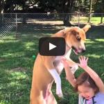 Jack Smash – Slow Motion video of dog hitting little girl