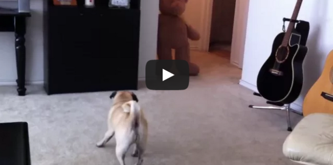 PUG CRAPS from Teddy BEAR SCARE