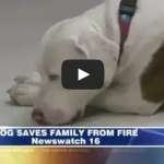 Rescued dog saves family from fire