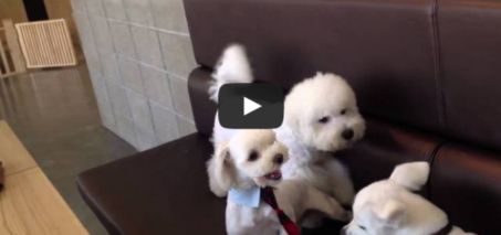 Responsible dog breaks up puppy fight