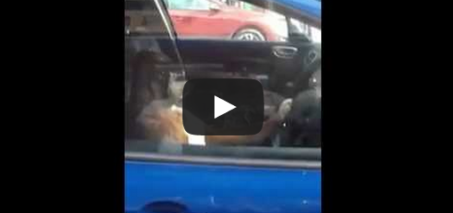 This is why you don't lock your dog in the car…