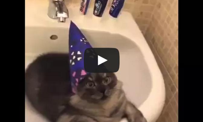 Wizard Of Cat