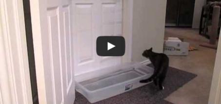 Mulder opening doors – A cat opens doors!