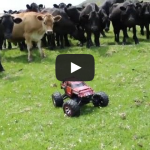 RC Roundup! Rawhide! Herding cows with RC car