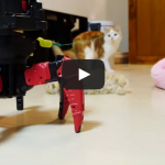 Six-legged walking robot plays with kittens