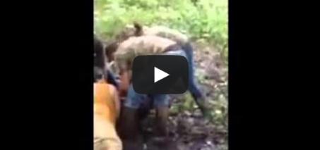 Bucket Bear Rescue!
