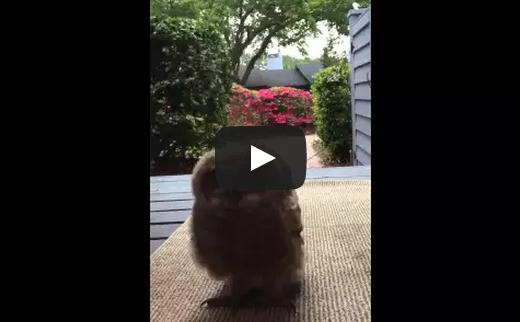 Hello Mr. Owl!