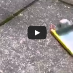 Poking a phone battery with a knife results in explosion
