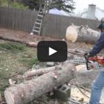 el corte mágico / Cutting the magic tree