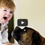 Babies Laughing Hysterically at Dogs Compilation 2015