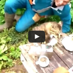 Cat Steals Fish From Fisherman – Ambush Fishing
