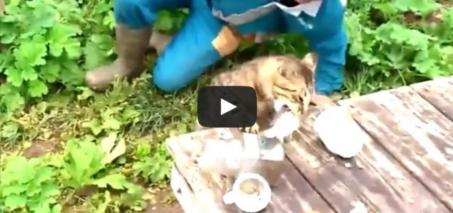 Cat Steals Fish From Fisherman – Ambush Fishing