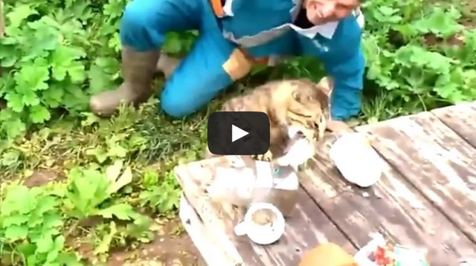 Cat Steals Fish From Fisherman