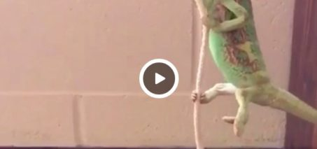 I came in like a wrecking ball – Pablo the Chameleon
