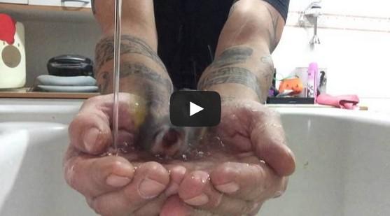 Bird taking a bath in owner's hands