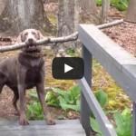 Dog Thinks Through A Problem