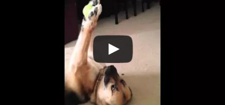 Dog shows off unbelievable ball handling skills