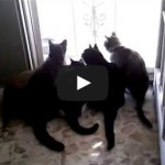Five scaredy cats running away from the screen door