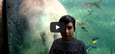 Hippo poops behind boy in tank