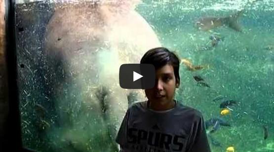Hippo Poops Behind Boy In Tank