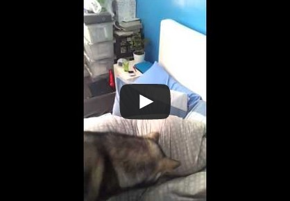 How to Wake up Someone with A Laser Pointer and A Dog