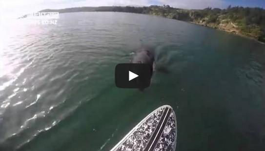 Luke Reilly stand-up paddle boarding orca