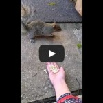 My first attempt at trying to love a squirrel