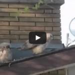 Owl Shat and Fled – Сова нагадила и сбежала