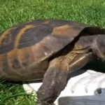 Taylor Swift – I Knew You Were Trouble [TURTLE VERSION]