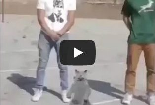 White boys and cat dancing to B.O.B We still in this b*tch