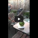 Ali cuts the watermelon
