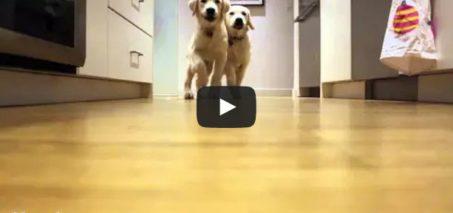 Pups running for dinner, timelapse style