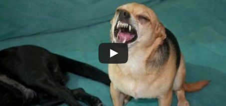 Compilation of different animals sneezing