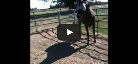 How to correct a horse who is disrespectful, food protective or ear pinning