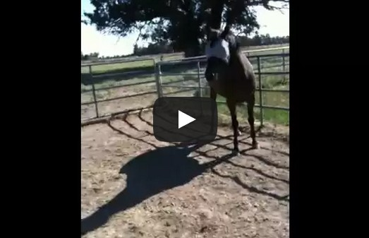 How to correct a horse
