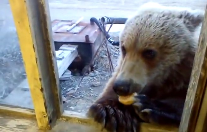 Man feeds bear through window