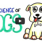 The Science of DOGS – ASAPScience