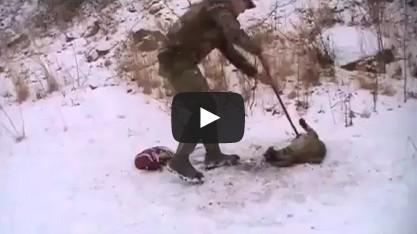 Bobcat release