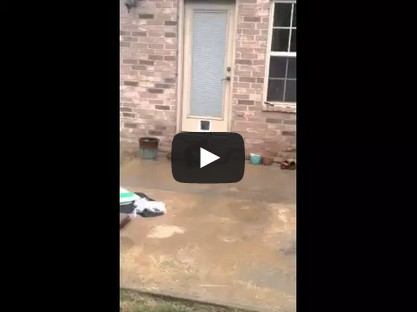 Epic Cat Door Fail