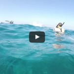Wild Dolphin Triple Barrel Rolls
