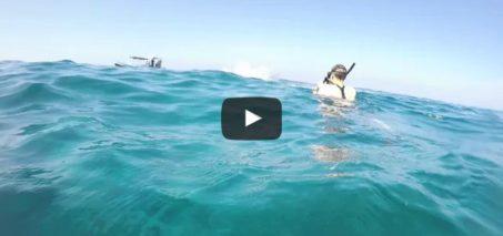 Wild Dolphin Triple Barrel Rolls