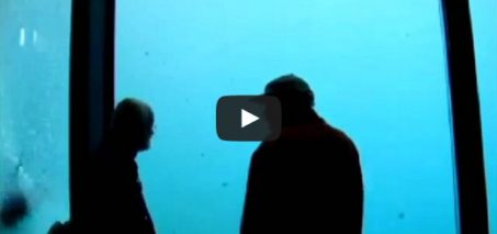 Polar Bear throws stone and breaks Aquarium Wall at Zoo
