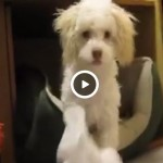 Puppy caught eating paper decides killing witness is the only way out.