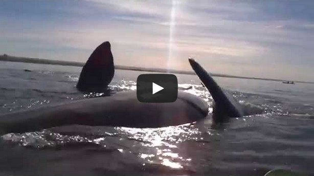 Whale lifts surprised kayakers out of the water