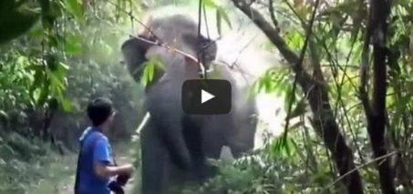 What Do You Do When An Elephant Charges At You? This.