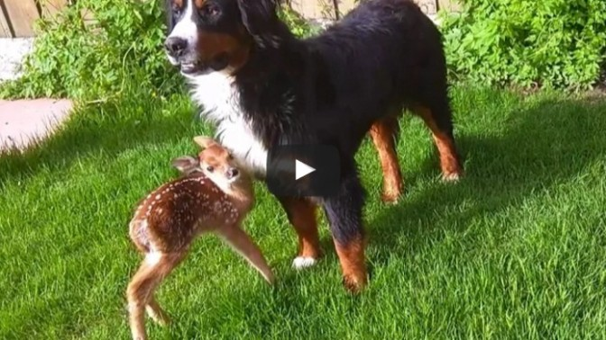 Baby deer rescue and release