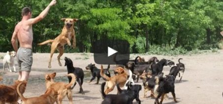 WATCH 450 DOGS RUN & PLAY TOGETHER!!!!