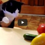 Cats Spooked by Cucumbers Compilation
